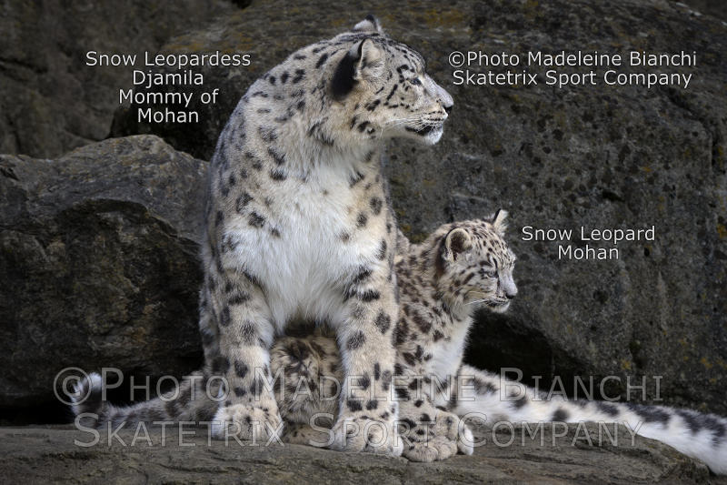 Little Snow Leopard Boy MOHAN and Mommy DJAMILA - today, I will be a good boy!