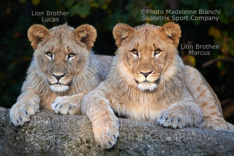 African Lion Brothers MARCUS and Lucas - Are you also a leftist appeaser?