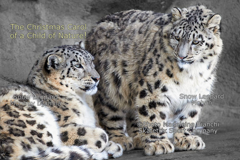Little Snow Leopard MOHAN - Jesus Christ is born so that we may be saved!