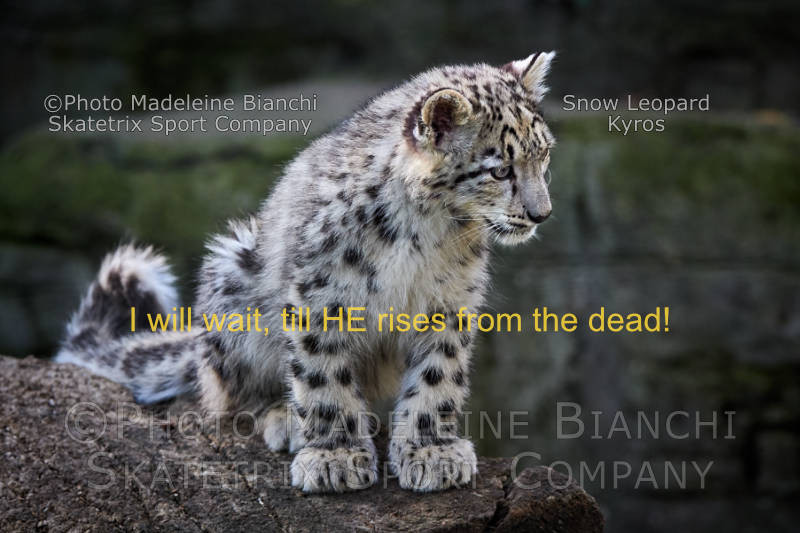 Snow Leopard KYROS - Believe in His promise! - He is the eternal life!