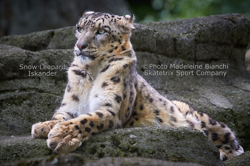 Snow Leopard ISKANDER - Why history repeats itself again and again?