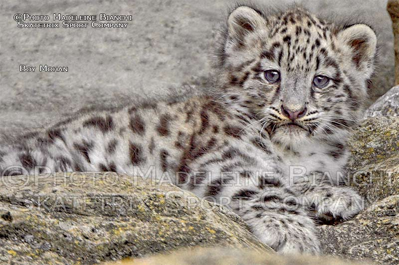 Little Snow Leopard Boy MOHAN