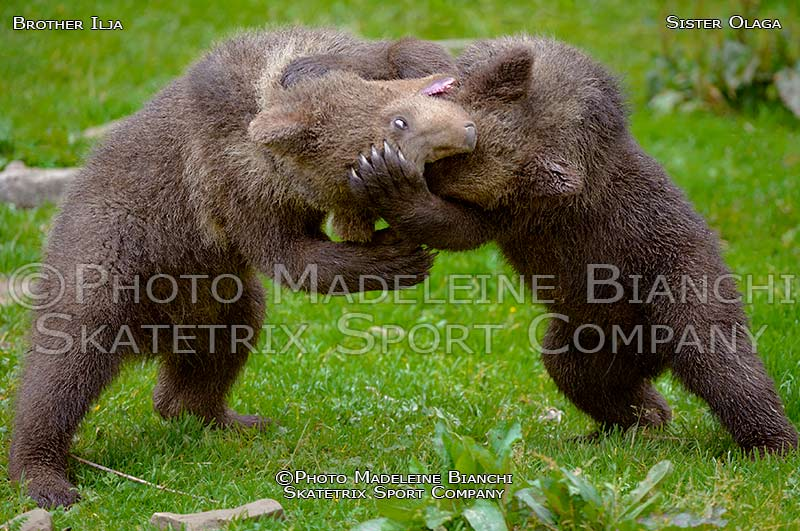 Brown Bear Cubs OLGA and ILJA