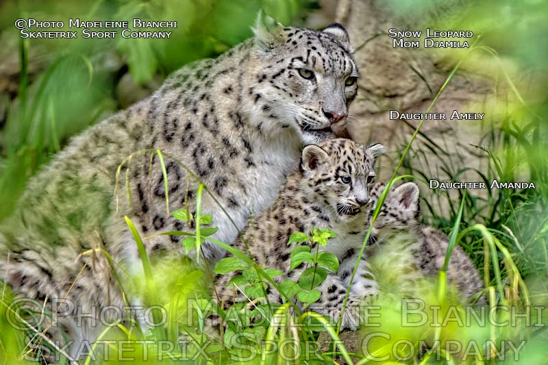 Snow Leopard Girls AMELY and AMANDA - Mommy DJAMILA